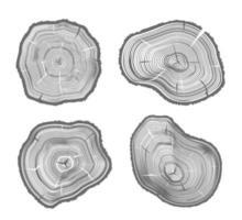 illustrazioni di legno tagliato vettore