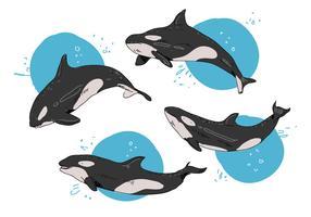Illustrazione disegnata a mano di vettore di posa delle orche