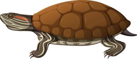tartaruga nello stile del fumetto isolato su priorità bassa bianca vettore