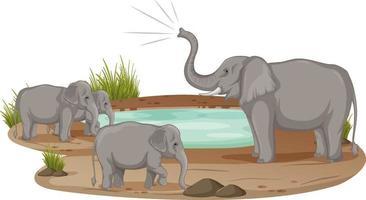 famiglia di elefanti in piedi allo stagno isolato su sfondo bianco vettore