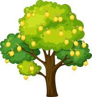 albero di limone isolato su sfondo bianco vettore