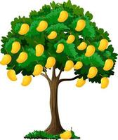 albero di mango giallo isolato su sfondo bianco vettore