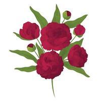 ramo di peonia colorato e realistico. fiori e boccioli rossi. illustrazione vettoriale
