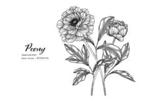 illustrazione botanica disegnata a mano di fiore e foglia di peonia con disegni al tratto. vettore