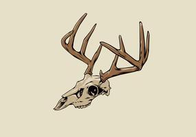 Illustrazione di vettore del cranio dei cervi