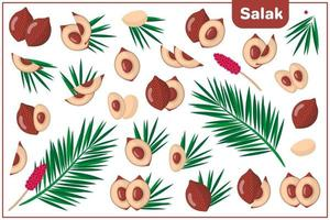 serie di illustrazioni vettoriali di cartone animato con salak frutti esotici, fiori e foglie isolati su priorità bassa bianca