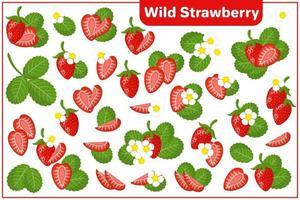 serie di illustrazioni vettoriali di cartone animato con fragoline di bosco frutti esotici, fiori e foglie isolati su priorità bassa bianca
