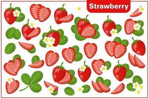serie di illustrazioni vettoriali di cartone animato con fragole frutta esotica, fiori e foglie isolati su priorità bassa bianca