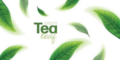 vettore di foglie di tè verde realistico