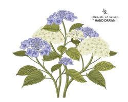 insieme decorativo floreale di schizzo. disegni di fiori di ortensie bianche e blu. linea arte vintage isolato su sfondi bianchi. illustrazioni botaniche disegnate a mano. vettore di elementi.