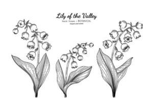 illustrazione botanica disegnata a mano del fiore e della foglia del giglio della valle con la linea arte. vettore