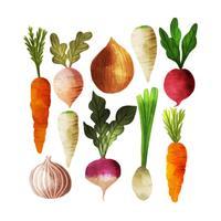 Raccolta di verdure dell'acquerello di vettore