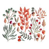insieme floreale dell'acquerello di autunno di vettore