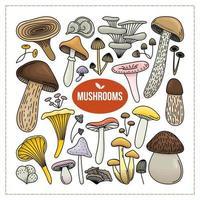 raccolta di funghi autunnali dipinti vettore
