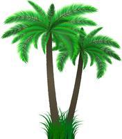 palme vettore