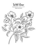 illustrazione botanica disegnata a mano del fiore e della foglia della rosa selvatica con disegni al tratto su sfondi bianchi. vettore