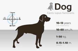 illustrazione delle informazioni del cane su uno sfondo vettoriale 10