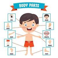bambino divertente che mostra parti del corpo umano vettore