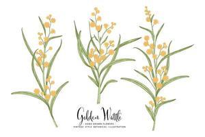 ramo di acacia dorata o acacia pycnantha con fiori e foglie set decorativo illustrazioni botaniche disegnate a mano vettore