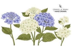 fiori di ortensia bianchi e blu altamente dettagliati elementi disegnati a mano illustrazioni botaniche insieme decorativo vettore