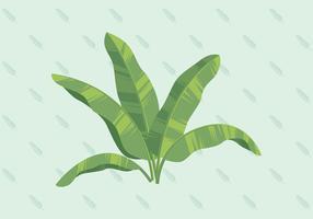 Illustrazione vettoriale di foglia di banana