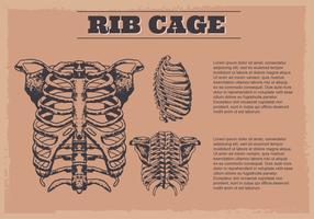 Sfondo digitale di ribcage