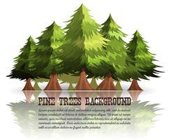 Sfondo di alberi di pino e abeti