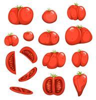 Set di pomodori rossi vettore