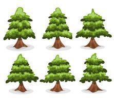 Collezione di alberi di pino e abeti