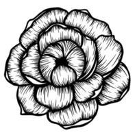 fiore di peonia disegnato a mano isolato su bianco. illustrazione vettoriale in stile schizzo