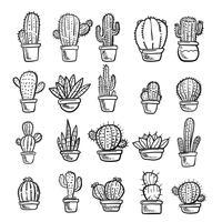 Vettore di cactus e succulente. Doodle illustrazione Set.