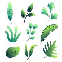 Vettore delle foglie verdi di gradiente