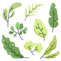 Raccolta di vettore delle foglie verdi
