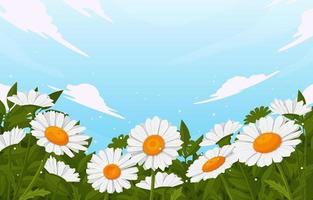 fiori di margherita in fiore vettore