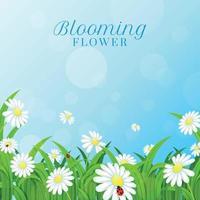 sfondo margherita in fiore vettore