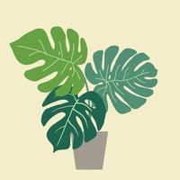 monstera deliciosa, la pianta del formaggio svizzero, una popolare pianta decorativa da appartamento originaria della foresta pluviale tropicale. vettore