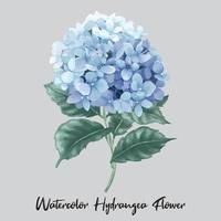 fiore di ortensia acquerello vettore