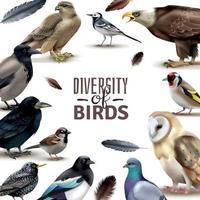 uccelli diversità cornice composizione illustrazione vettoriale