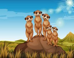 Meerkats che sta sulla roccia vettore