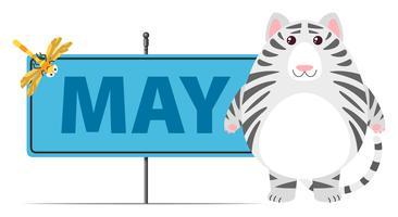 Gatto grigio e segno per maggio