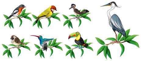 Un insieme di uccelli selvatici su sfondo bianco vettore