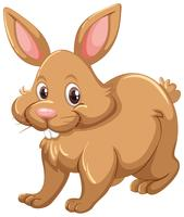 Coniglio marrone su sfondo bianco