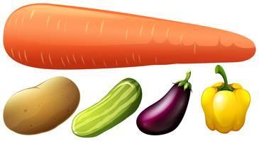 Diversi tipi di verdure fresche vettore