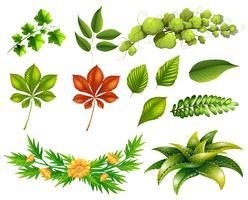 Diversi tipi di foglie vettore
