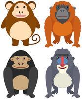 Quattro tipi di scimmie su sfondo bianco vettore