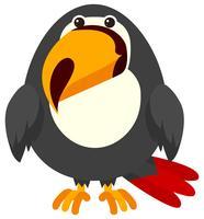 Uccello del tucano su fondo bianco