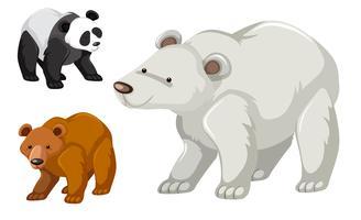 Un tipo di set di orsi vettore