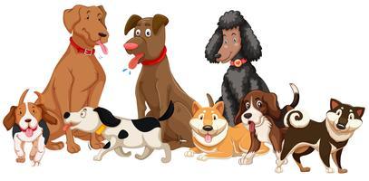 Insieme di vari cani vettore