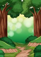 Una scena di foresta semplice vettore