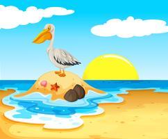 uccello pellicano sulla spiaggia vettore